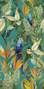 Parrot Land