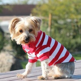 Striped dog polo shirt red and white size X Large