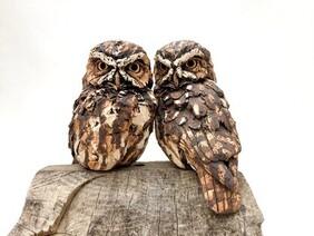 Little Owl - Pair