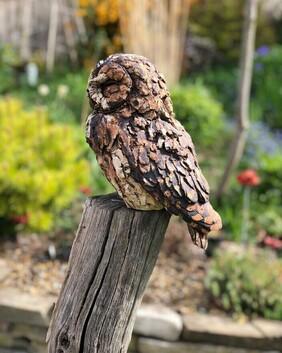 Tawny Owl (tall post)