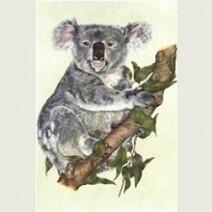 Rolfie the Koala Print