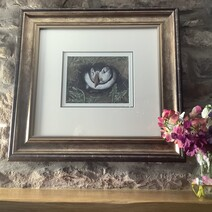 Tommy Noddy, Farne Island Puffin Original Painting