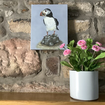 Puffin standing doing nuffin! Canvas Print