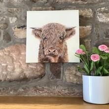 Harry the Hairy Highland Cow Canvas Print
