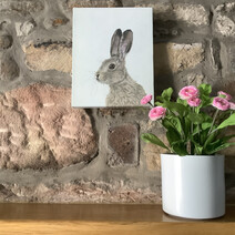 Hartley the Hare Canvas Print