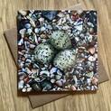 Beach Babes (Eggs & Shells) Greetings Card