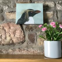 Rigsby the Rockhopper Penguin Canvas Print