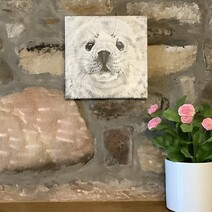 Neil the Baby Grey Seal Canvas Print