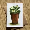 Pot of Primroses Greetings Card