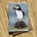 Puffin standing doing nuffin! Greetings Card