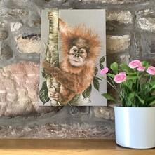 Arun the Orangutan Canvas Print