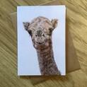 Jameela the Camel Greetings Card