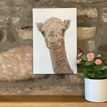 Jameela the Camel Canvas Print