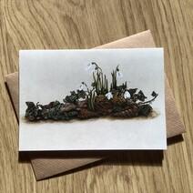 Snowdrop Cluster Greetings Card