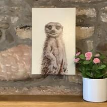 Melvin the Meerkat Canvas Print
