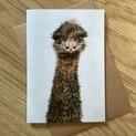 Eddy the Emu Greetings Card