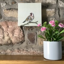 Gorgeous Goldfinch Canvas Print