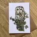 Tawny Owl Greetings Card
